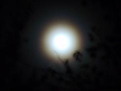 moon photos, colorful moon, harvest moon