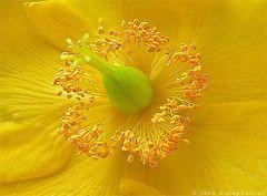flower photos, nature, plants, gentle flower, fresh flowers, live plants